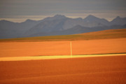 Alberta Landscape Framed Prints - High Plains of Alberta with Rocky Mountains in distance Framed Print by Mark Duffy