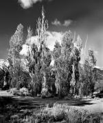 Western Photographs Prints - High Sierra Grove Print by Norman  Andrus