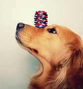 Golden Retriever Photos - High Stakes by Elizabeth Aldridge