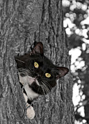 Sweet Spot Prints - High Up in a Tree Print by Sari ONeal