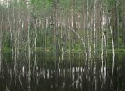Floods Photos - High Waters In A Forest Of Evergreens by Mattias Klum