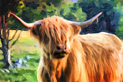 Kyloe Art - Highland Bull by Dave Nielsen