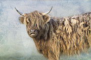 Bad Hair Posters - Highland cattle Poster by Louise Heusinkveld