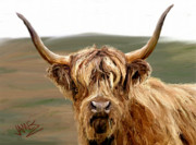 Animals Framed Prints - Highland Coo Framed Print by James Shepherd
