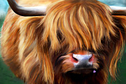 Michelle Wrighton Posters - Highland Cow Poster by Michelle Wrighton