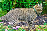 Susan Leggett Photo Metal Prints - Highland Lynx Cat in Garden Metal Print by Susan Leggett