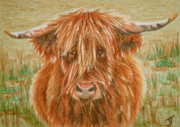 Kyloe Prints - Highlander ACEO Print by Yvonne Johnstone
