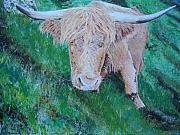 Ken Day - Highlander or Heiland Coo