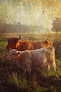 Jenny Rainbow - Highlanders. Scottish Countryside