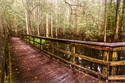 Bridge Greeting Cards Prints - Highlands Hammock Print by Debra and Dave Vanderlaan