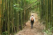 Sports Art Art - Hiker In Bamboo Forest by Greg Vaughn - Printscapes
