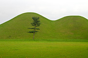 Simplistic Originals - Hill tombs and tree Korea by Gabor Pozsgai