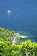 Sailboat Art - Hills Of Yellow Flowers With Sailboat Offshore by Lasse Bolstad