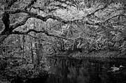 White River Scene Framed Prints - Hillsborough River III Framed Print by David Waldrop