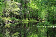 Theresa Willingham Prints - Hillsborough River Vista Print by Theresa Willingham