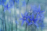 Floral Metal Prints - Hillside Blues Metal Print by Priska Wettstein