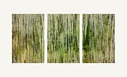 Greenish Posters - Hillside Forest Poster by Priska Wettstein