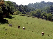 LA Burdette - Hillside Grazing