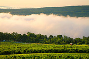Finger Lakes Posters - Hillside Vineyard II Poster by Steven Ainsworth