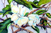 Helen Drawings Framed Prints - Himalayan Magnolia Framed Print by Helen Kern