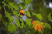 Hint Of Autumn Print by Bonnie Bruno