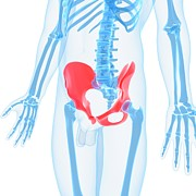X-ray Image Art - Hip Bones, Artwork by Sciepro