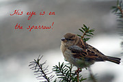 Winter Promise Prints - His eye is on the sparrow Print by Linda  Jackson