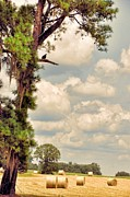 Country Scenes Art - His Lookout Post by Jan Amiss Photography