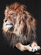 Lions Digital Art Framed Prints - His Majesty Framed Print by Bill Stephens