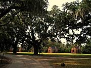 Oaks Framed Prints - Historic Slave Houses at Boone Hall Plantation in SC Framed Print by Susanne Van Hulst