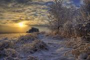 Harsh Prints - Hoar Frost Covered Trees At Sunrise Print by Dan Jurak