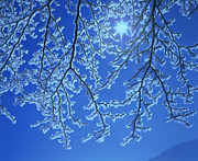Hoar Frost Posters - Hoar Frost Poster by Hermann Eisenbeiss and Photo Researchers