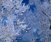 Idaho Prints - Hoarfrost Print by Leland Howard