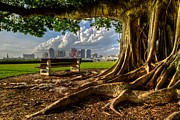 Tree Roots Photo Prints - Hobbit Eyeview Print by Debra and Dave Vanderlaan