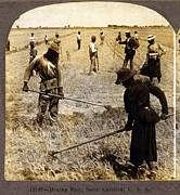 Manual Labor Framed Prints - Hoeing Rice. African American Farm Framed Print by Everett