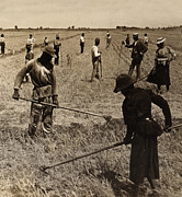 Work Hard Framed Prints - Hoeing Rice in South Carolina - c 1904 Framed Print by International  Images