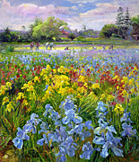 Floral Paintings - Hoeing Team and Iris Fields by Timothy Easton