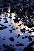Hoh Photos - Hoh River Reflections by Greg Vaughn - Printscapes