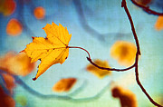 Autumn Leaf On Water Metal Prints - Holding On Metal Print by Darren Fisher