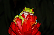 Tree Frog Prints - Holding On Print by Tom and Pat Cory