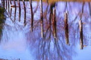 Water Reflections Photos - Holding Steadfast by Cathy  Beharriell