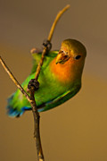 Love Bird Prints - Holding Tight Print by Syed Aqueel