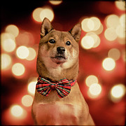 Bow Tie Framed Prints - Holiday Outfit Framed Print by DancingShiba