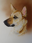 German Sheppard Prints - Holly Print by Julian Wheat