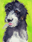 Dog Paintings - Holly by Sally Muir