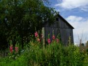 Hollyhocks Photos - HollyHock Barn by Michael L Kimble