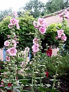 Taos Prints - Hollyhocks Taos New Mexico Print by Wayne Potrafka