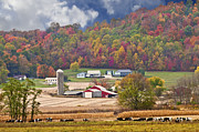 Photos Of Autumn Prints - Holstein Cattle Farm Print by Randall Branham