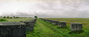 Holy Island Prints - Holy Island Barriers Print by Jan Faul