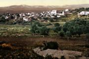 Holy Land - Jenin Print by Munir Alawi